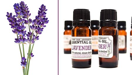 lavender-herb-essential-oil-smallest.jpg